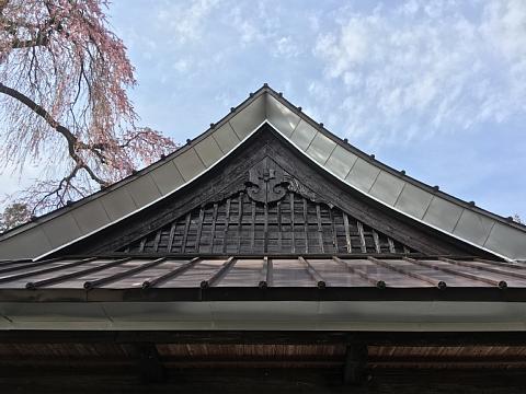20160331jiunjisakura (2).JPG