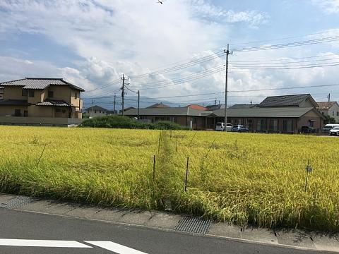 201609tanbofuji (2).JPG