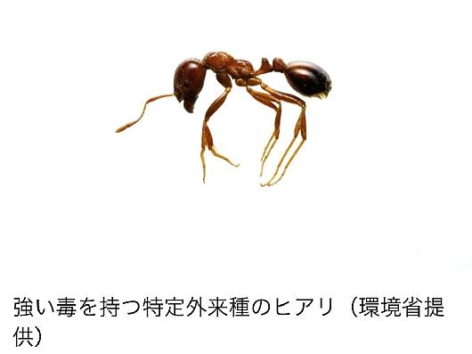 hiarikita (2).jpg