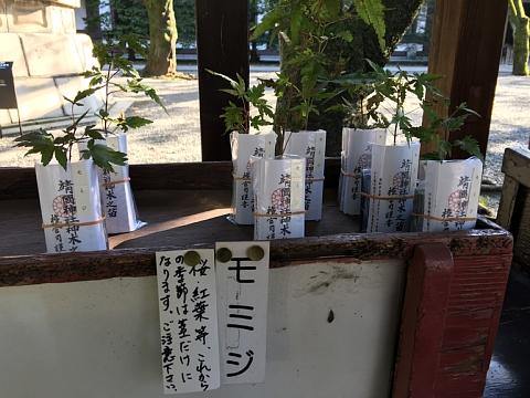 2016yasukuninaegi (2).JPG